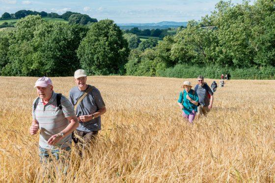 Walking in fields of gold